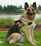 Military - Police Dogs
